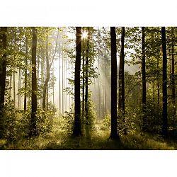 AG Art Fototapeta XXL Raný les 360 x 270 cm, 4 diely